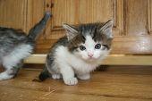 Cute Little Kitten poster