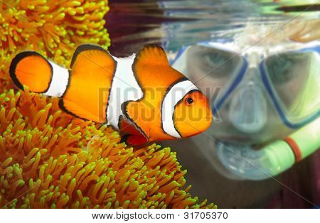 Female scuba diver looking up to a Clown fish in tropical sea.