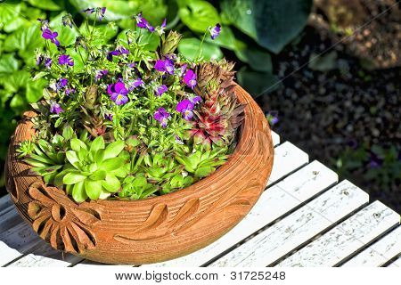 Violas and various succulents growing outside in an ornamental terracotta pot.