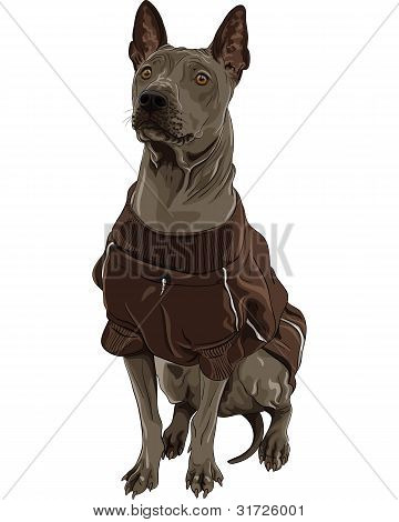 Vector Thai Ridgeback Dog Breed Sitting