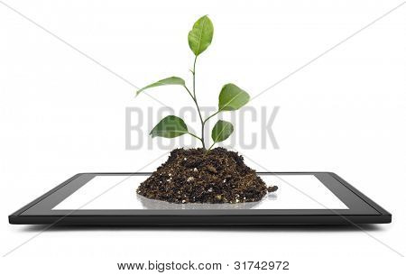 tablet computer isolated in a hand on the white backgrounds. tree