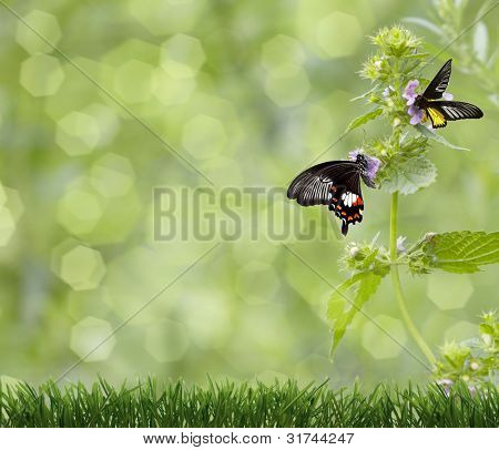 butterfly on a green background and the grass