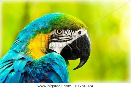 Exotic colorful African macaw parrot, beautiful close up on bird face over natural green background, bird watching safari, South Africa wildlife