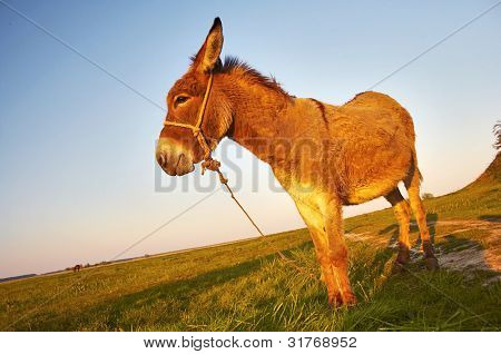 donkey in a farmland