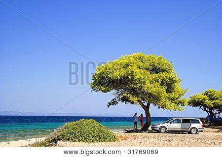 Árboles en la playa. Gente en vacaciones.