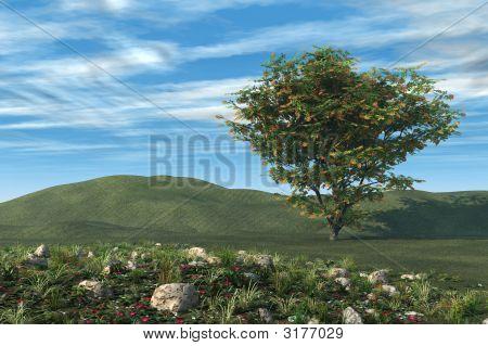 Árvore de firethorn e jardim