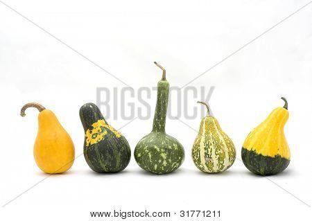pumpkin for frame decoration