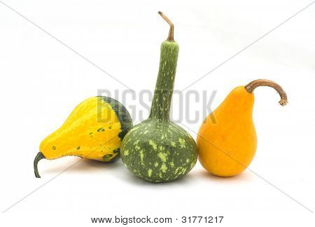 pumpkin for frame decoration