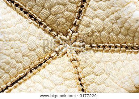 Close-up on starfish