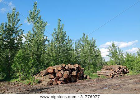 Lumber Industry
