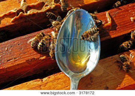 Honey In A Spoon.