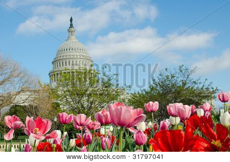 Tulipanes frente al Capitolio en primavera, Washington DC
