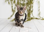 Adorable Tabby Kitten With Yellow Eyes Sitting On A White Floor On A Studio Set With Greenery Backdr poster