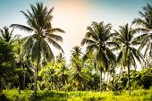 Beautiful Palm Trees With A Lush Crown Against The Sea And Blue Sky. . Vacation Concept. Palm Grove  poster