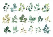Collection Of Watercolor Greenery Floral Rose Leaf Plant Forest Herbs Leaves Spring Flora Isolated O poster
