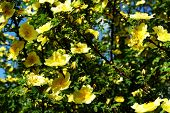Yellow Flowers In The Wild On A Background Sunset poster
