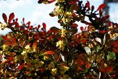 Red Leaves And Yellow Flowers On A Branch Against A Blue Sky poster