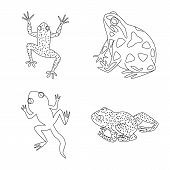 Vector Design Of Amphibian And Animal Sign. Set Of Amphibian And Nature Vector Icon For Stock. poster