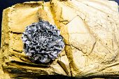 Forging And Sculpture. Eternal Beauty. Botany Concept. Beautiful Silver Flower. Floral Shop. Metalli poster