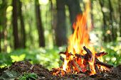stock photo of pain-tree  - Bonfire in the forest - JPG