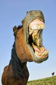 image of western saddle  - Horse with a sense of humor - JPG