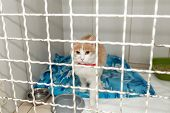 Alone Cat In Shelter Cage In Clinic. poster