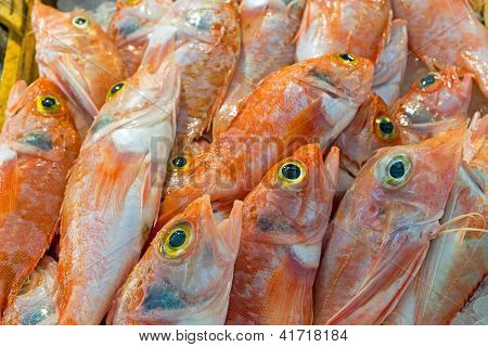 Red mullet fish for sale
