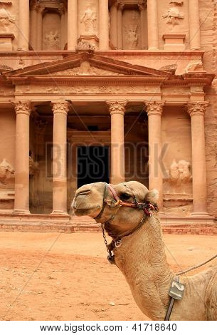Siting Cammel And The Treasury At Petra, Lost Rock City Of Jordan.