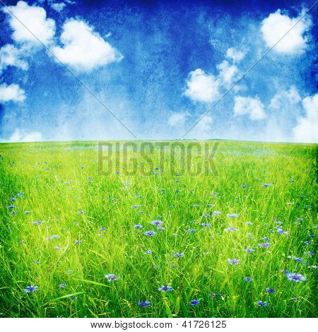 Summer field and blue cornflowers in grunge and retro style.