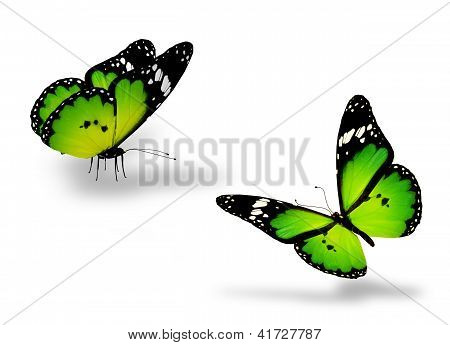 Two Green Butterflies On White