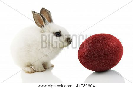 White Easter Bunny With Red Egg