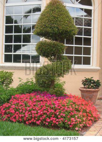 Arbusto colorido tomada en abril del 2008