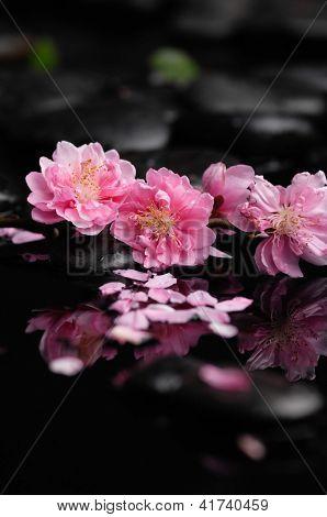 Zen pebbles. Stone spa ,spring flower
