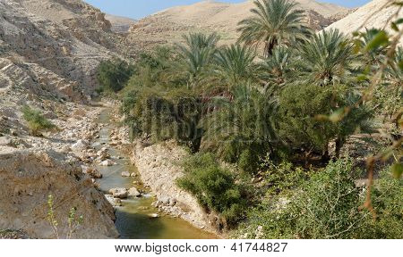 Wadi Qelt or Nahal Prat creek in Judean Desert near Jericho in spring