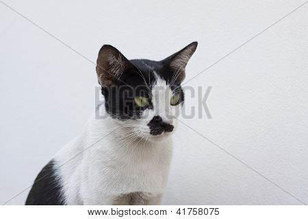 Close Up Face Of Thai Cat Black And White Color