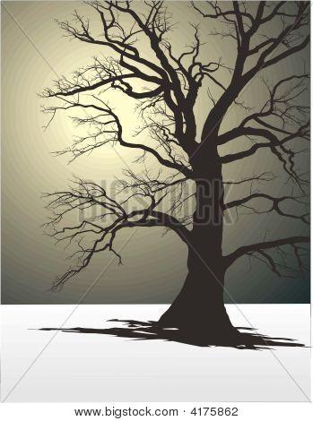 Tree In Winter Fog 2