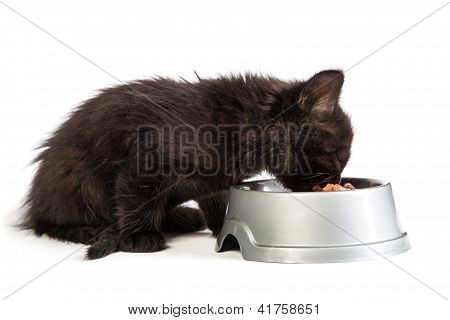 Black Kitten Eating Cat Food On A White Background