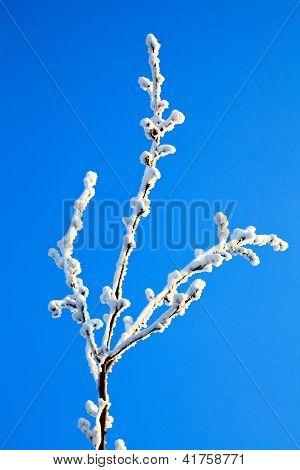 Snow On A Tree Branch