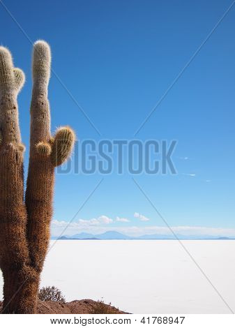 Giant Cactus And Uyuni Salt Lake