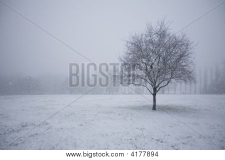 Snow Tree In Empty Field