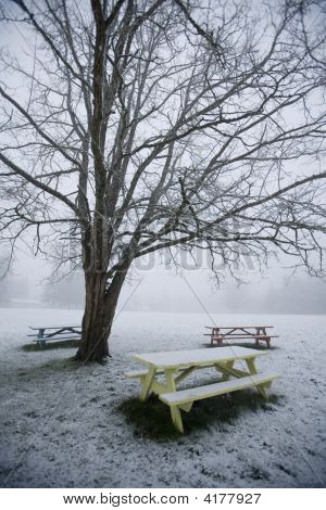 Snowy Picnic Tables Under A Winter Tree