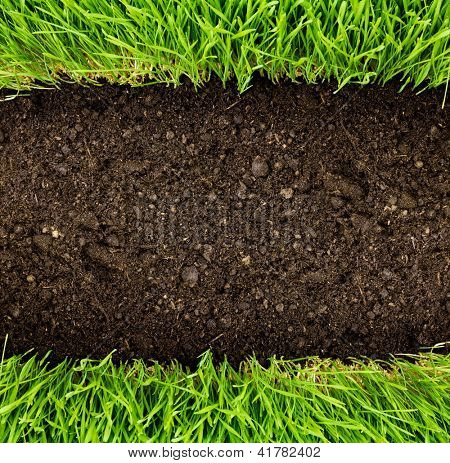 green grass in soil