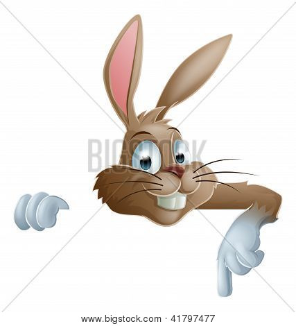 Bunny Rabbit Pointing Down