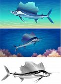 stock photo of sailfish  - Set of sailfishes including three images  - JPG
