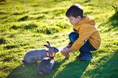 stock photo of tame  - Little boy feeding two rabbits in farm on beautiful sunny day - JPG