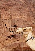 stock photo of square mile  - Cammels at Petra Urn Tomb in the background Lost rock city of Jordan - JPG