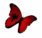 Постер, плакат: Албанский флаг бабочки полет изолированные на белом фоне