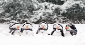 stock photo of huddle  - Little snowmen in a group carol singing in the snow - JPG