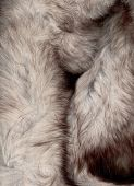 pic of arctic fox  - Background of fur texture Arctic fox Silver fur - JPG