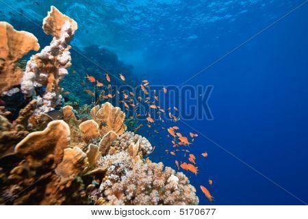 Ocean, Fish And Coral
